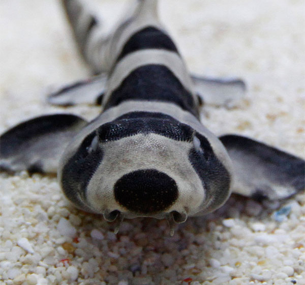 Blue Reef Aquarium Hastings   Discover Animals