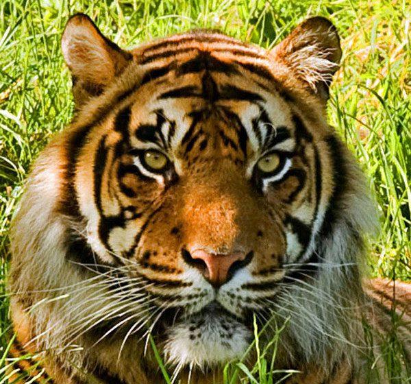 Shepreth Wildlife Park Discover Animals