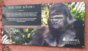 Port Lympne Reserve Kent (Discover Animals)