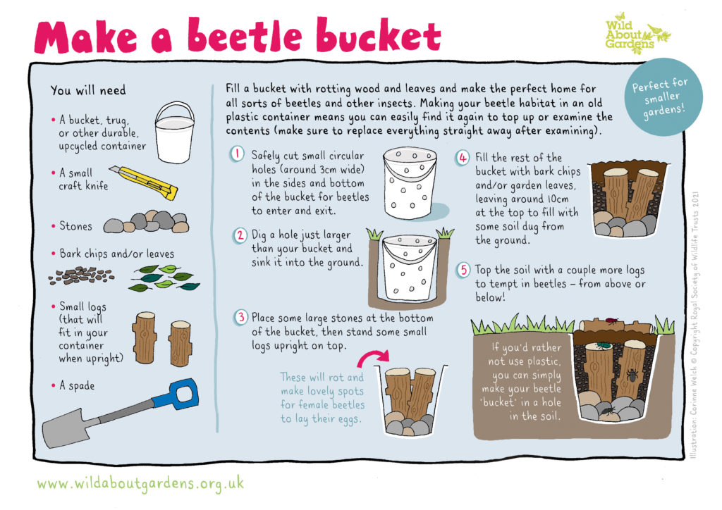 How to Make a Beetle Bucket (Wildlife Trusts)
