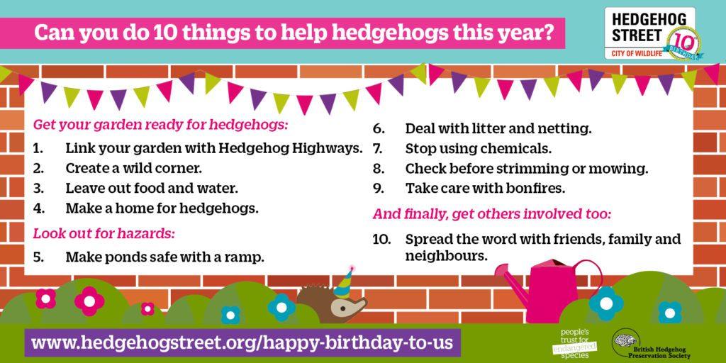 Ten ways to help hedgehogs in 2021 (Hedgehog Street)