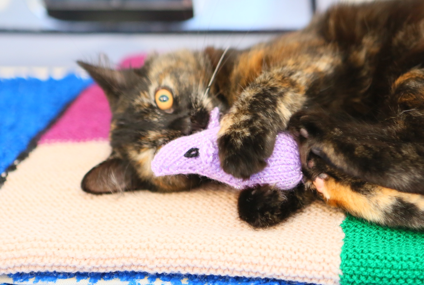 Uk S Largest Cat Charity Launch Appeal For Knitters Discover Animals