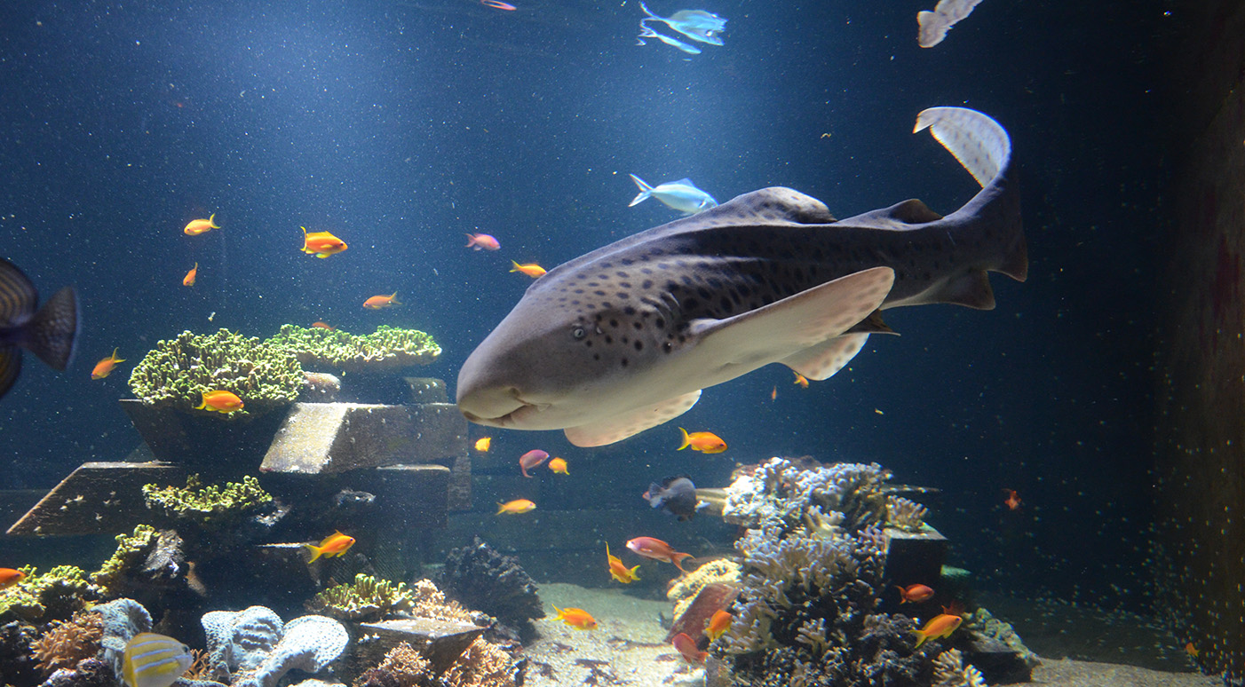 Nausicaa is the French National Sea Life Centre in the coastal town of ...