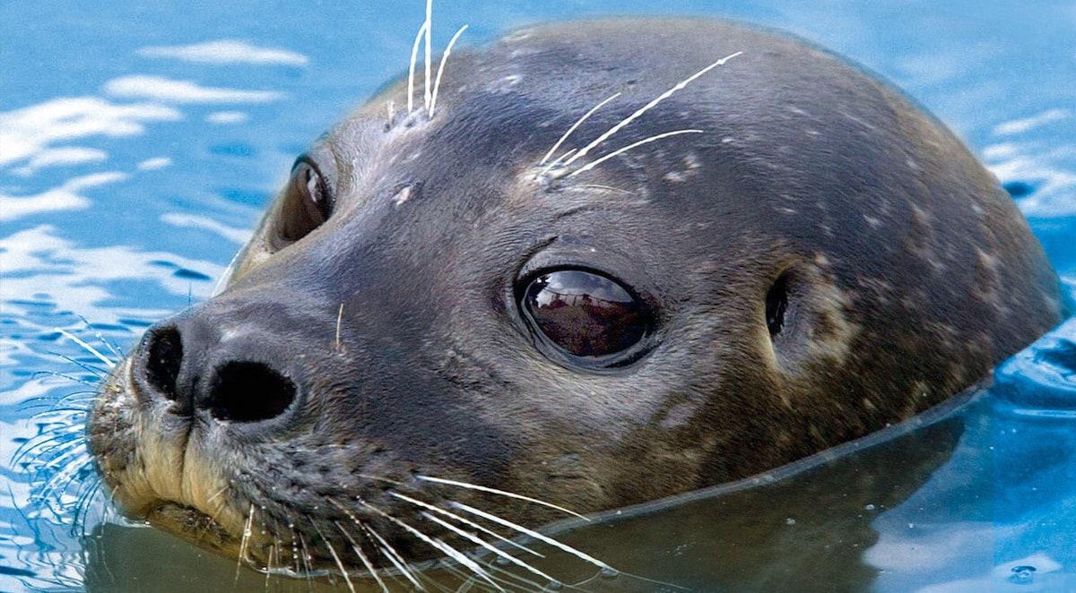 The Scottish SEA LIFE Sanctuary, Oban, United Kingdom