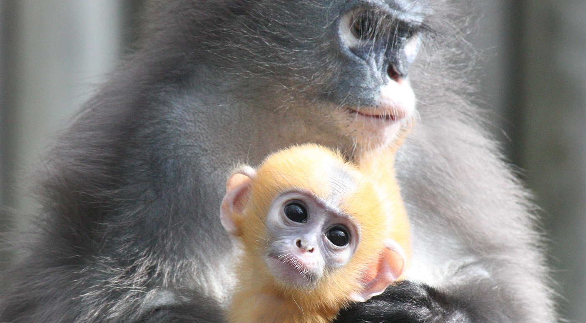 Atherstone United Kingdom  city photos : Twycross Zoo, Burton Road, Atherstone, United Kingdom