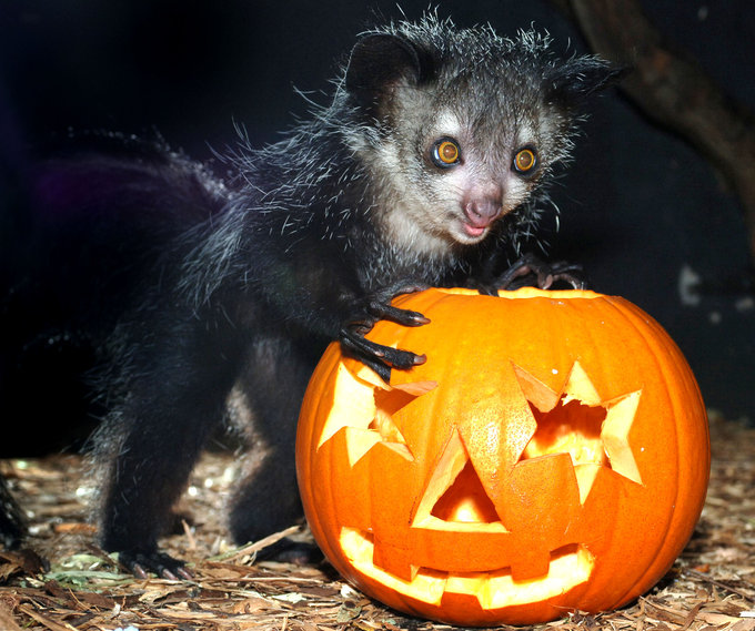 Where to discover animals this Halloween | Discover Animals